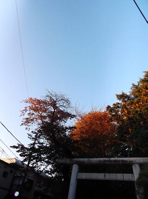 氷川神社308
