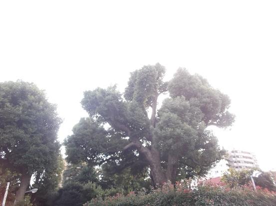 樹2550