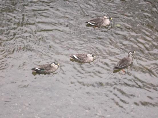 鳥2639