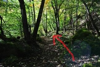 精進が滝遊歩道8