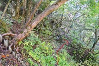 精進が滝遊歩道26