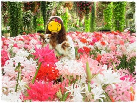 IMG_1325_2013112522021078d.jpg