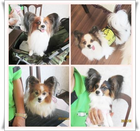 cats_201309302356091b8.jpg