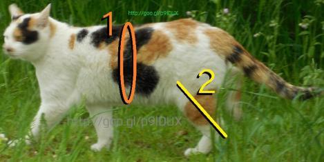 ネコの体脂肪率計算