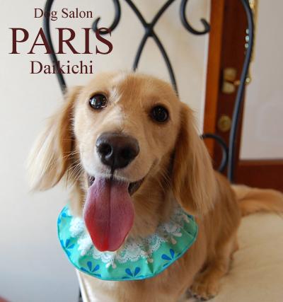 Daikichi2013sep.png