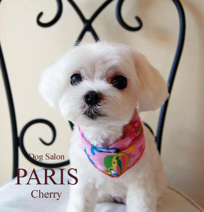 cherry2013nov.png