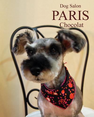 chocolatak2013oct.png