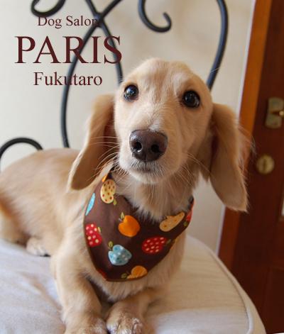 fukutaro2013oct2.png