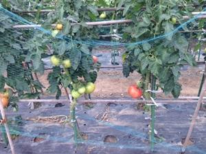 家庭菜園3