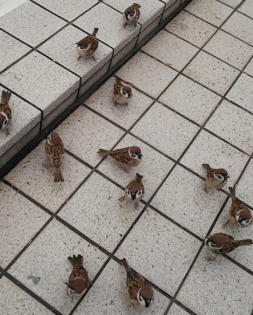 逃げない雀