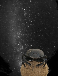 dung_beetle_milky_way_20140927102002450.jpg