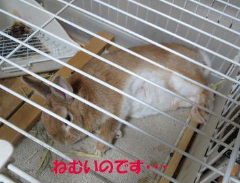 pig 20130605 001