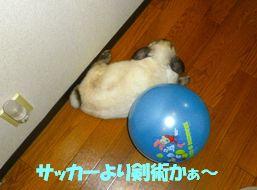 sakura 20130607 001