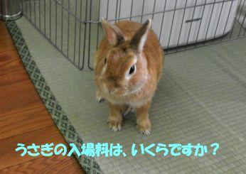 pig 20130609 001