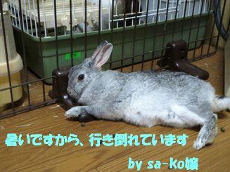 sa-ko 20130620 001