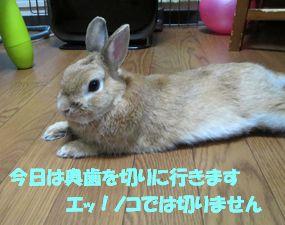 pig 20130621 001