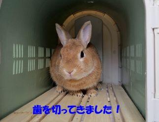 pig 20130622 001