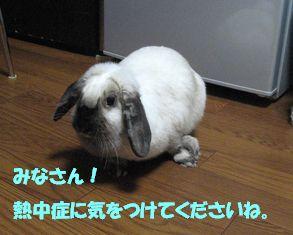 sakura 20130717 001