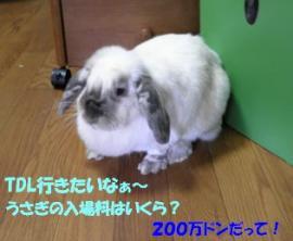 sakura 20130729 001