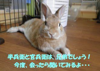 pig 20130815 001