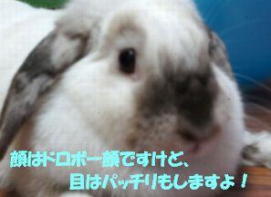 sakura 20130829 002