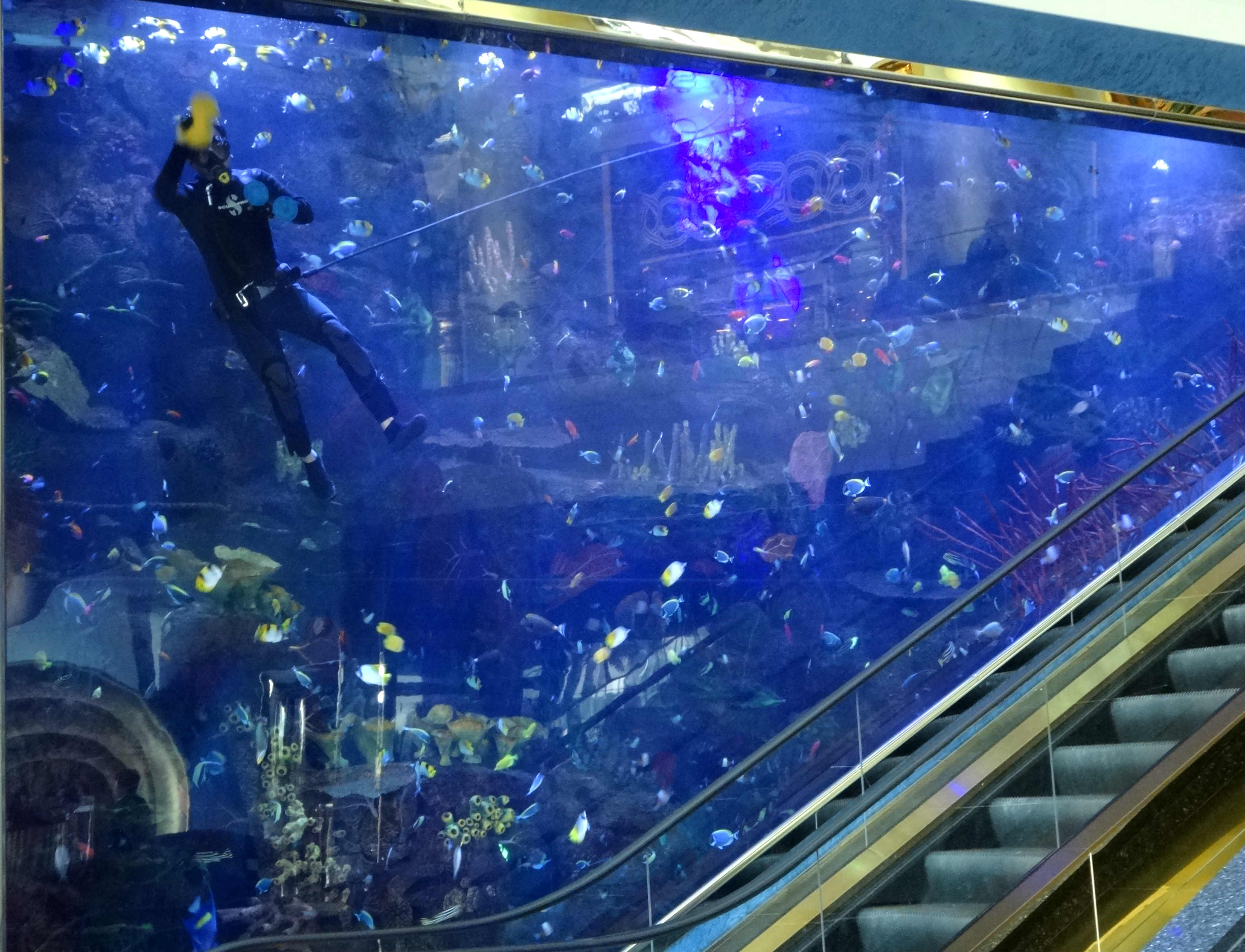 cleaning_-aquarium.jpg