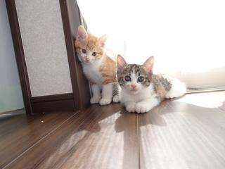 cat2_131014.jpg