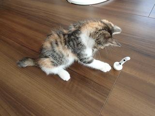 cat4_131014.jpg