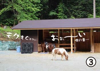 pony03.jpg