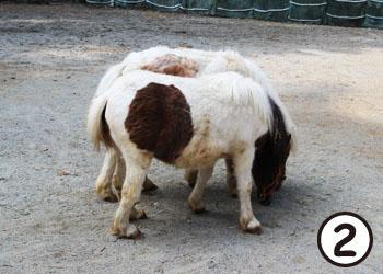 pony06.jpg