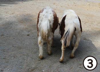 pony07.jpg