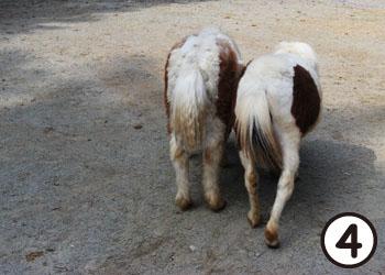 pony08.jpg