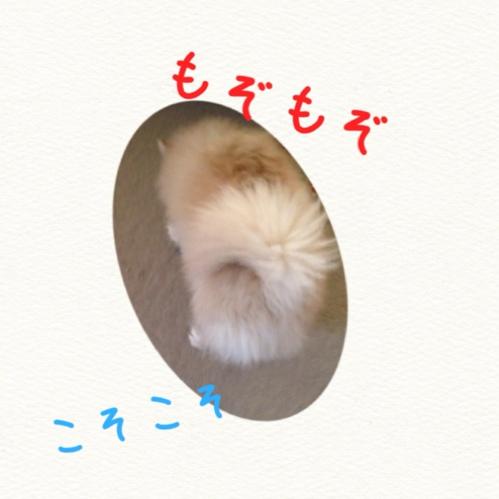 fc2blog_20140917154343506.jpg
