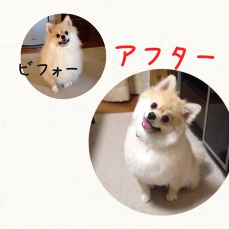 fc2blog_201409292133552ca.jpg