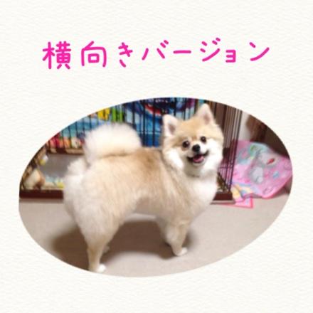 fc2blog_20140929213633605.jpg
