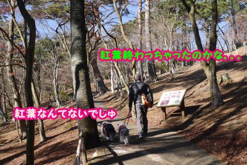 030_convert_20141211144829.jpg