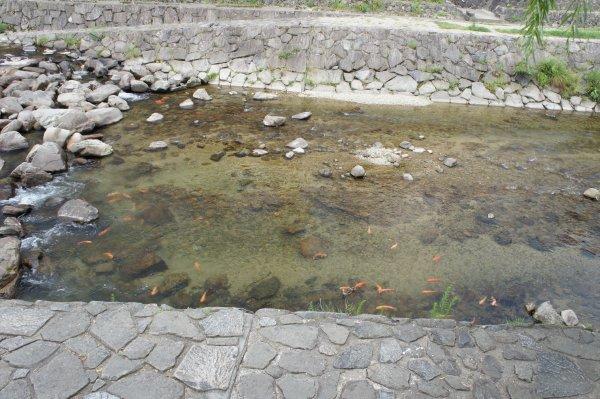 20130722takayamasinai1.jpg