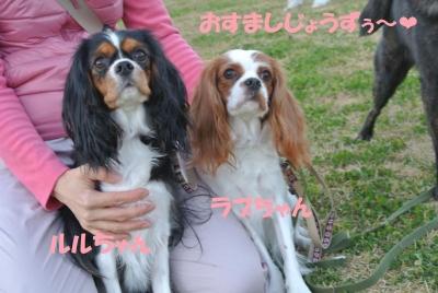 013_convert_20131120143742.jpg