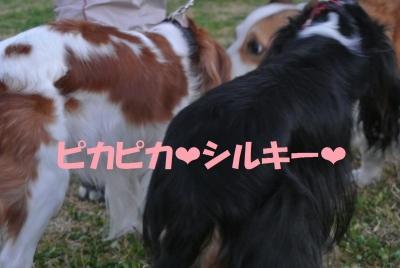020_convert_20131120143813.jpg