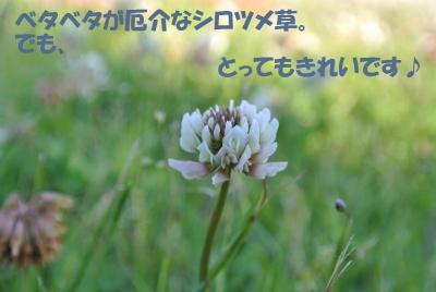088_convert_20130610134019.jpg