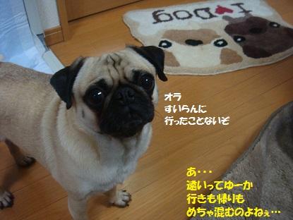 DSC00283_20130724174947.jpg