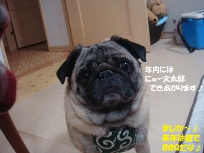 DSC02552_20130616164215.jpg