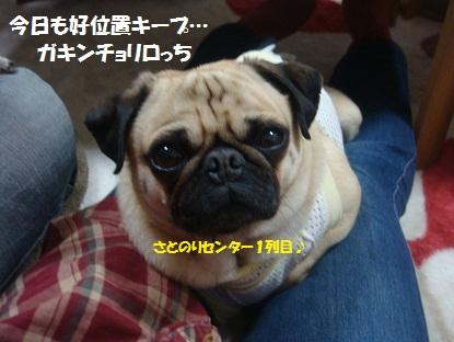 DSC02589_20130616165526.jpg