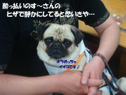 DSC03144_20130620222127.jpg
