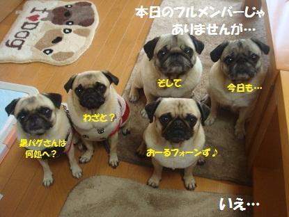 DSC03285_20130625195845.jpg