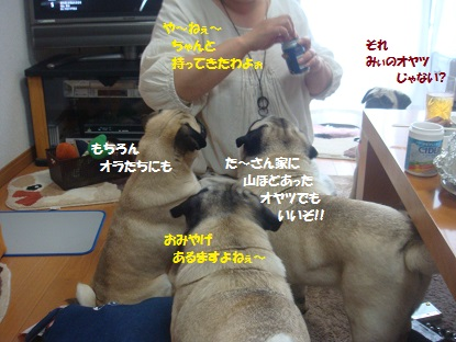 DSC03304_20130626190348.jpg