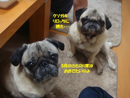 DSC03434_20130626190708.jpg