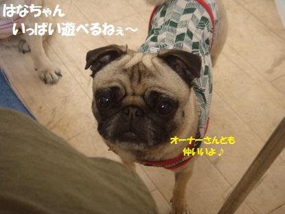 DSC03478_20130627195446.jpg