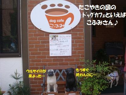 DSC03633_20130704025057.jpg