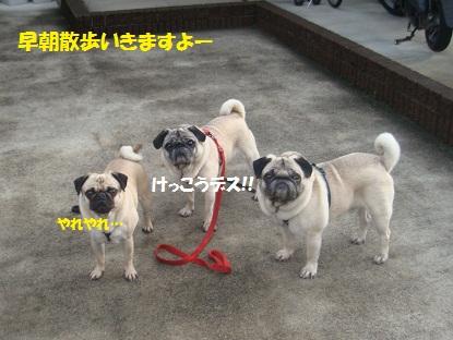 DSC03838_20130531220033.jpg
